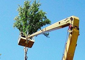 Благоустройствое лесо-парковых зон, спил деревьев